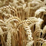 Is A Gluten Free Diet Healthier? – Dietitian Advice