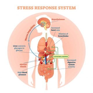 how does stress affect IBS